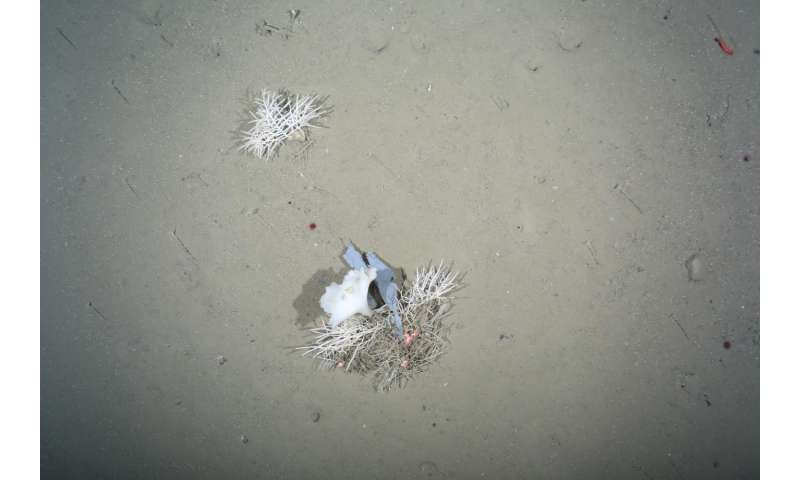Litter levels in the depths of the Arctic are on the rise