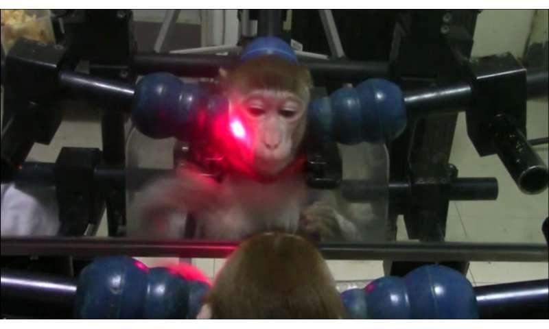 Monkeys taught to pass mirror self-awareness test