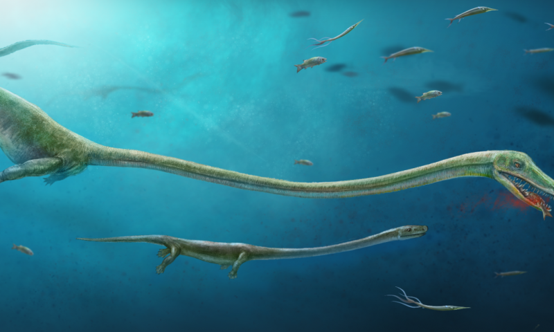 Long-dead reptile gave live birth, study says