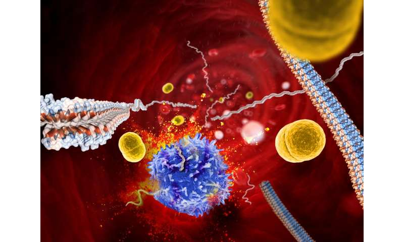 Novel amyloid structure could lead to new types of antibiotics