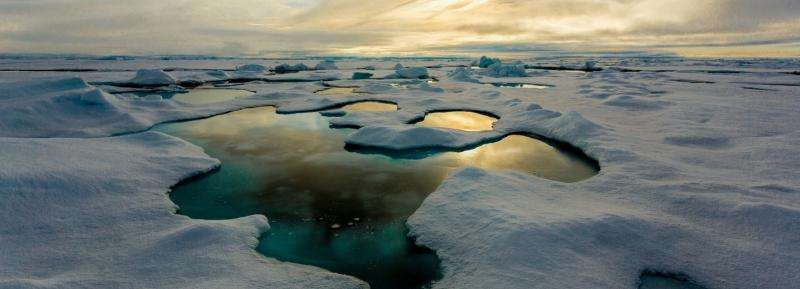 Melting sea ice may lead to more life in the sea