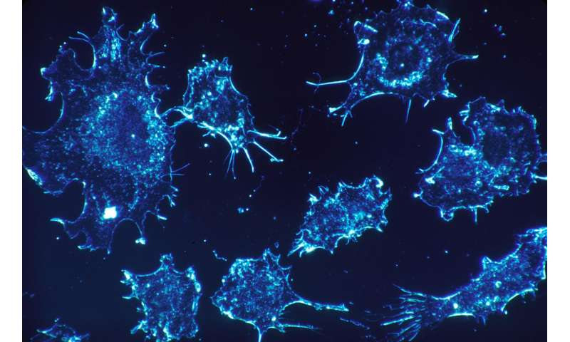 Researchers develop treatment that turns tumors into cancer