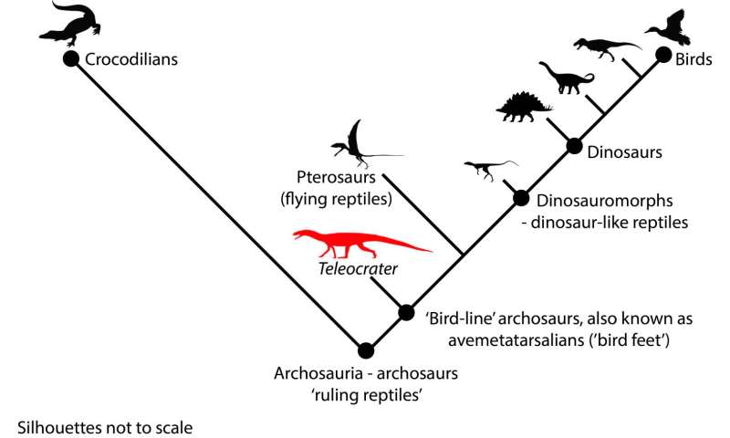 Discovery of early, 'croc-like' reptile sheds new light on evolution of dinosaurs