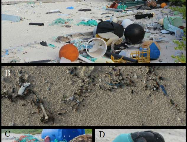 No escaping ocean plastic: 37 million bits of litter on one of world's remotest islands