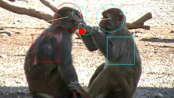 Newly discovered brain network offers clues to social cognition