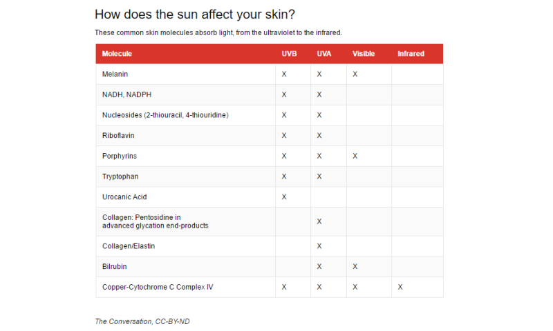 How do the chemicals in sunscreen protect our skin from damage?
