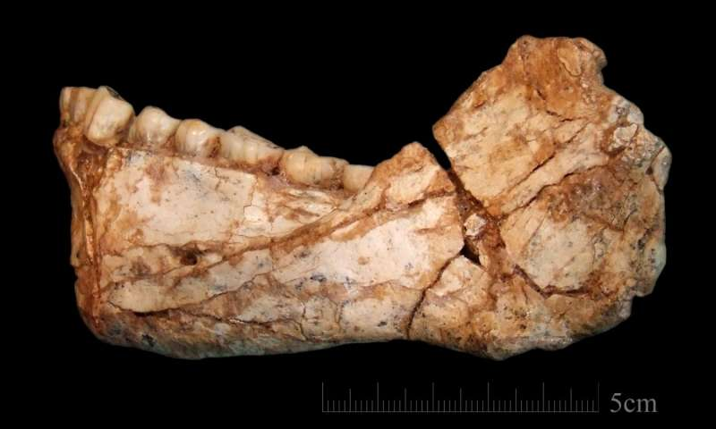 Scientists discover the oldest Homo sapiens fossils at Jebel Irhoud, Morocco