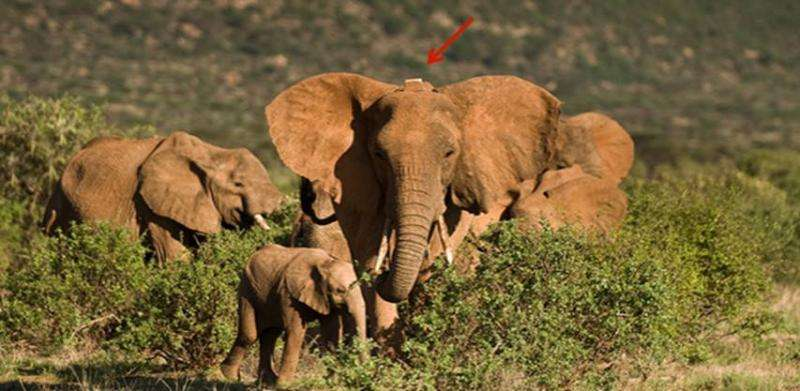 Ballistic shockwave sensor is tool in fight against elephant poachers doing record-level damage