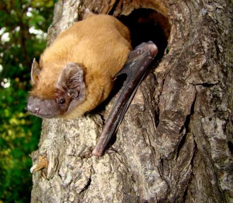 Smart detectors set to monitor urban bat life