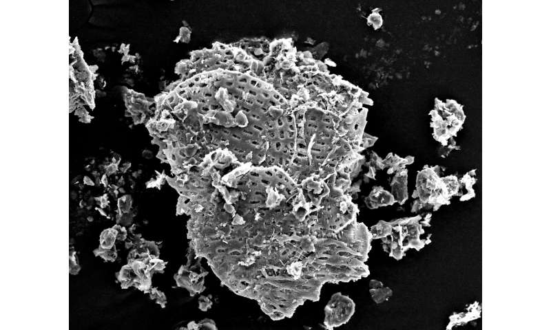 Single-celled eukaryote fossil with evidence of mineralizing found in Yukon