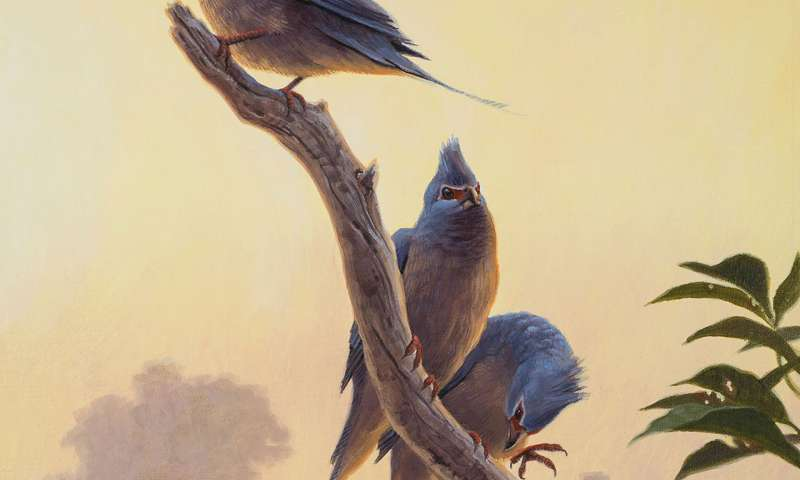 New species of ancient bird discovered in New Mexico