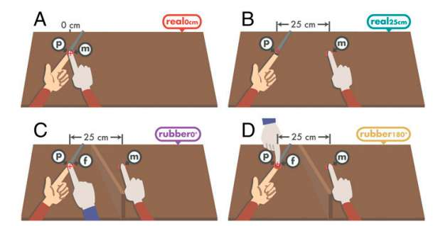 Experiments suggest body ownership causes weakening of self-generated tactile sensations