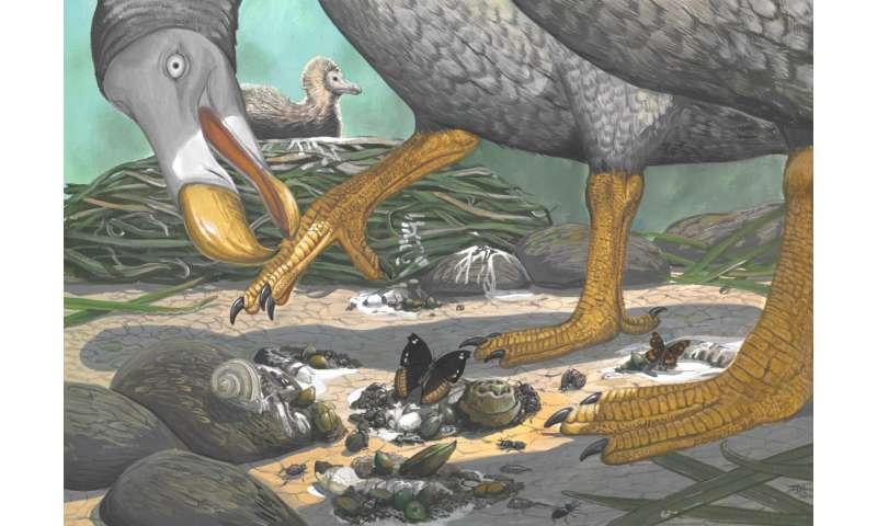 The secret life of dodos, revealed