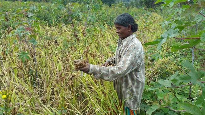 First detailed decoding of complex finger millet genome