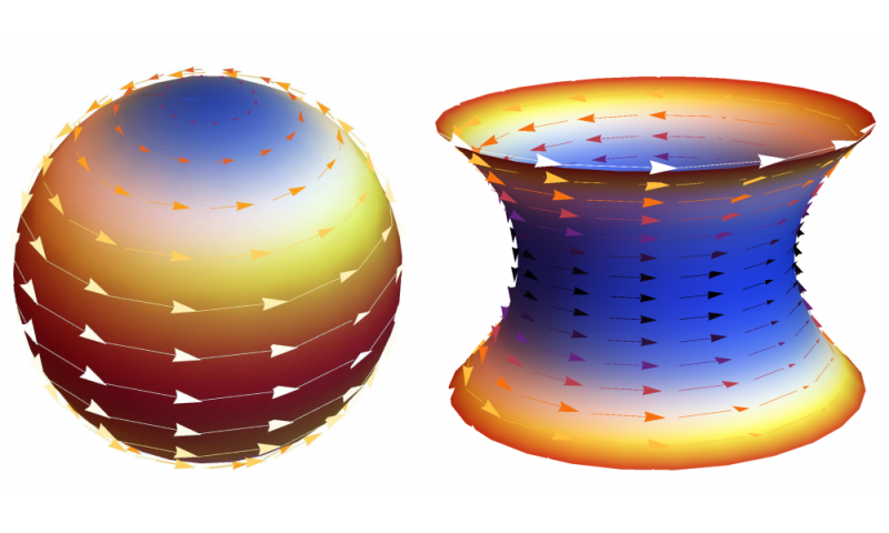 Researchers analyze flocking behavior on curved surfaces