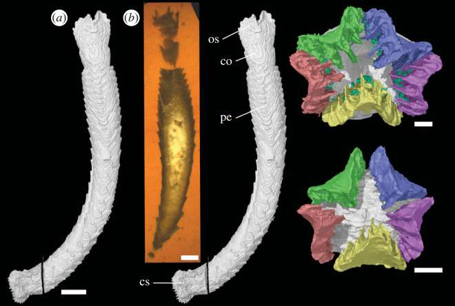 430-million-year-old extinct echinoderm found in England