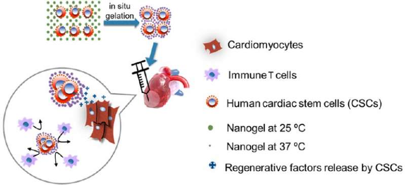 Getting to the heart of the matter: Nanogels for heart attack patients
