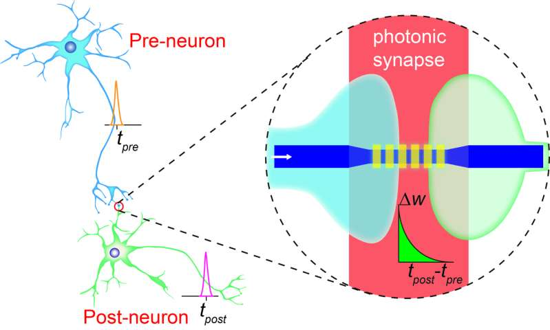 Move towards 'holy grail' of computing by creation of brain-like photonic microchips