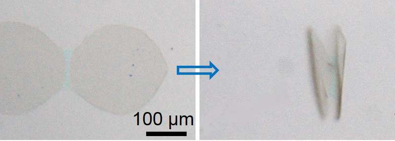 A way to cause graphene to self-fold into 3-D shapes