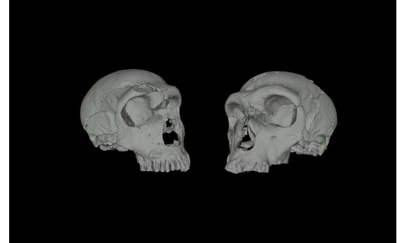 Cold temperatures found to cause nasal structure similarities between Neanderthal and modern humans