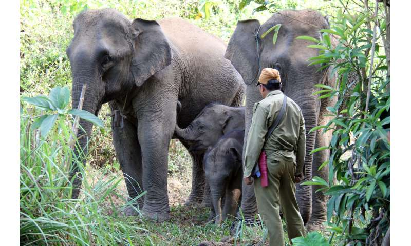 Ensuring the survival of elephants in Laos: A matter of economics