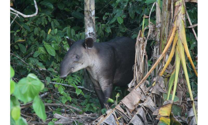 Human activities are reshaping forest animal communities around the world