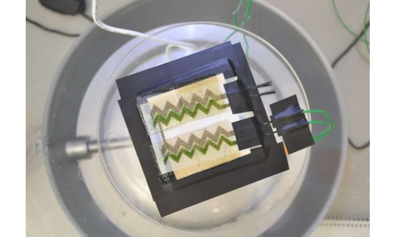 Wallpaper bio-solar panel developed by researchers