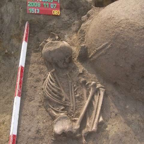 DNA study shows Neolithic Europeans interbred with Anatolian migrants
