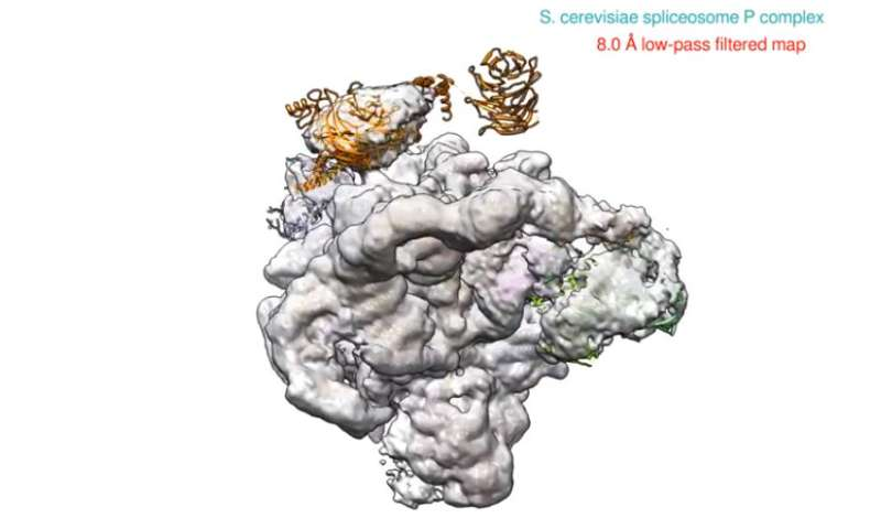 The spliceosome—now available in high definition
