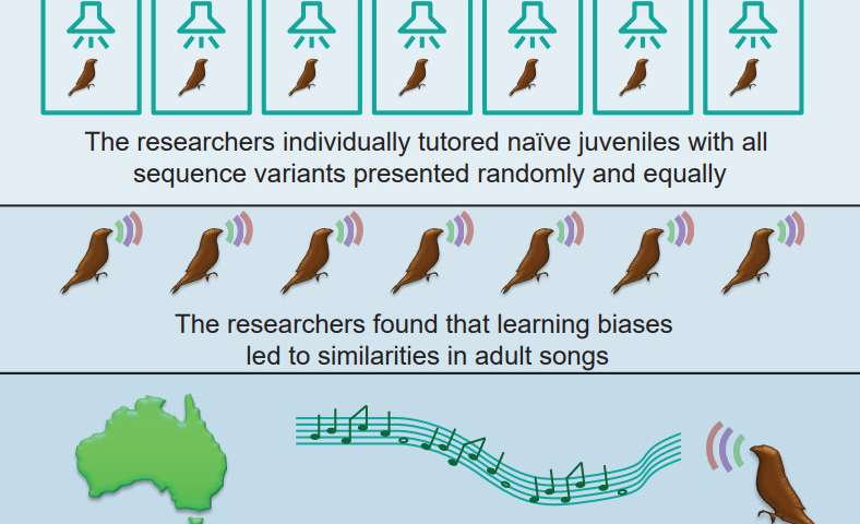 Do birdsong and human speech share biological roots?