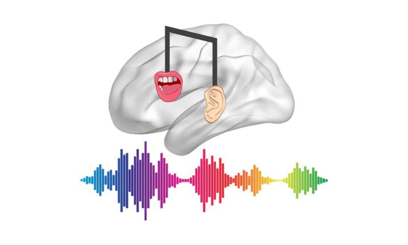 How musical training affects speech processing
