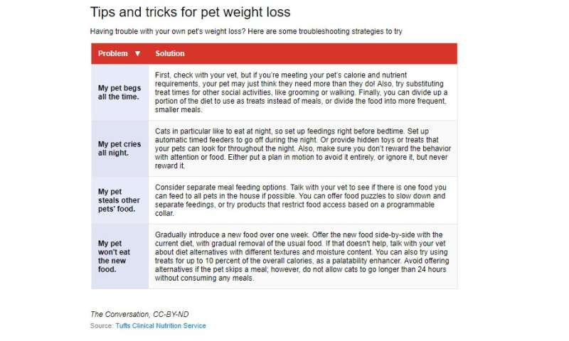 Why are so many of our pets overweight?