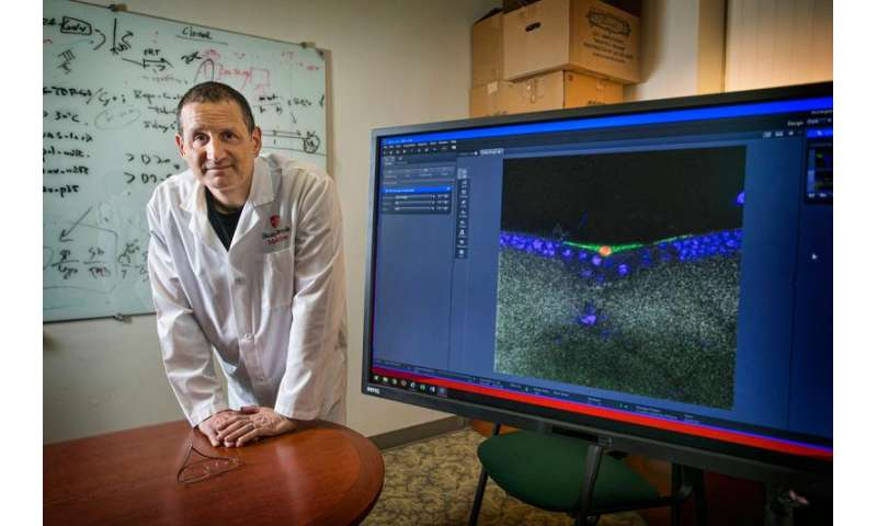 """Research suggests a possible role for a storm of """"jumping genes"""" in ALS"""