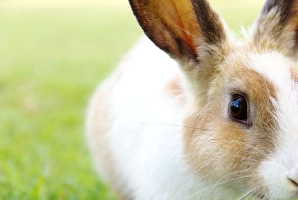 Scientists warn of seasonal increase of deadly rabbit disease