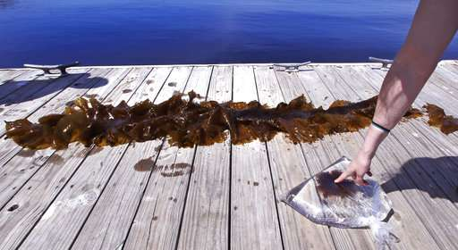 Where's the kelp? Warm ocean takes toll on undersea forests