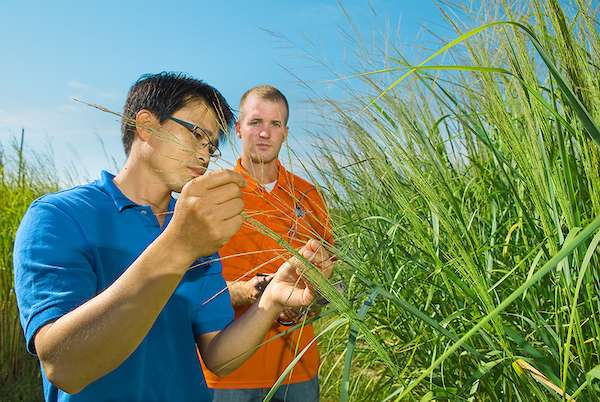 Climate change may confuse plant dormancy cycles