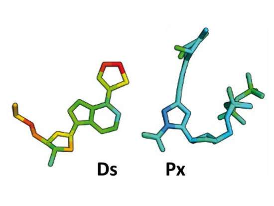Researchers create new 'letters' to enhance DNA functions