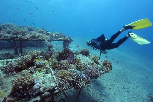 Researchers from the Interuniversity Institute for Marine Sciences in the southern Israeli resort city Eilat monitor coral growt