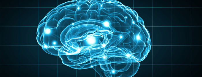 Researchers shed new light on a key player in brain development
