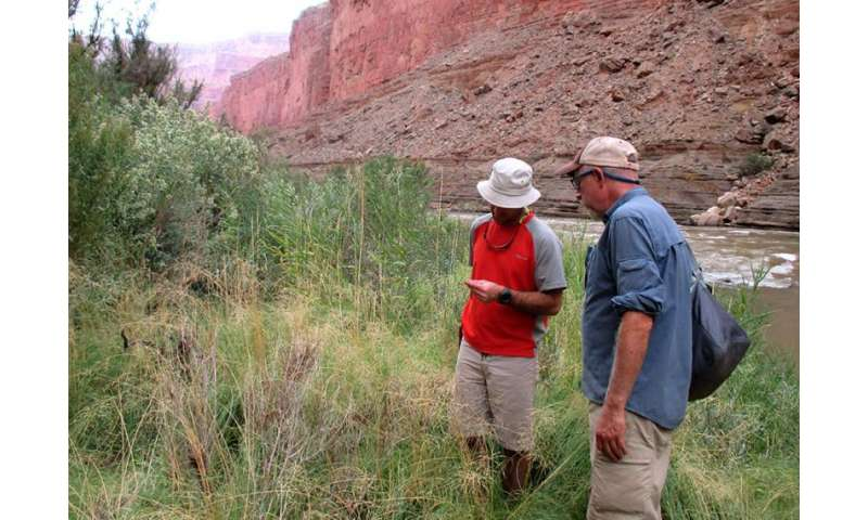 Research suggests climate change likely to cause significant shift in Grand Canyon vegetation