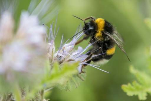 Scientists are still trying to pinpoint how the insecticide affects bees, which are crucial for the pollination of crops ranging
