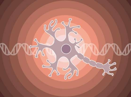 Researchers identify an indirect way of countering a key genetic lesion in neuroblastoma