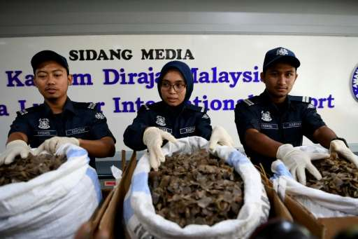 A $1.2 million illegal shipment of scales from the critically endangered pangolin have been uncovered in Malaysia, the second su