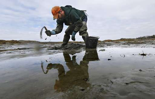 Abating bait: Decline in prized worms threatens way of life