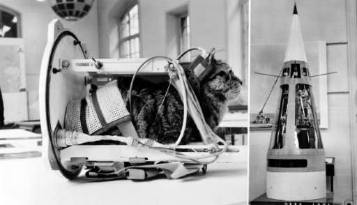 A cat shows how the first feline in space would have looked once fitted with equipment, at the National Conservatory of Arts and