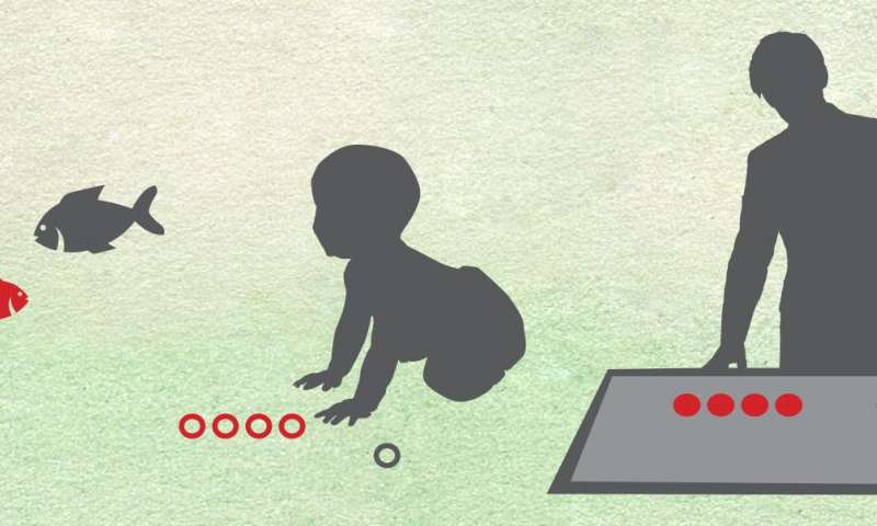 Adult subcortex processes numbers with the same skill as infants