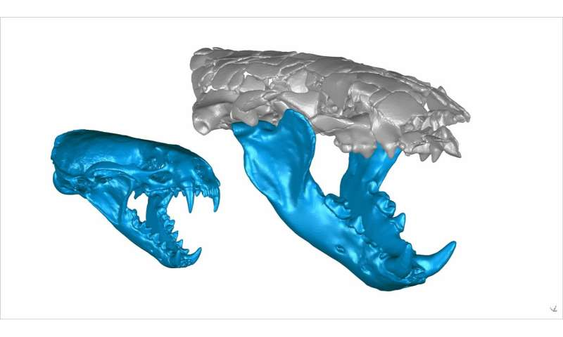 A giant, prehistoric otter's surprisingly powerful bite