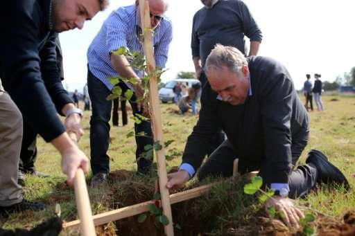 A group of men plant a carob tree during the first stage of a project in Oreites, near Paphos on November 26, 2017 aimed at revi