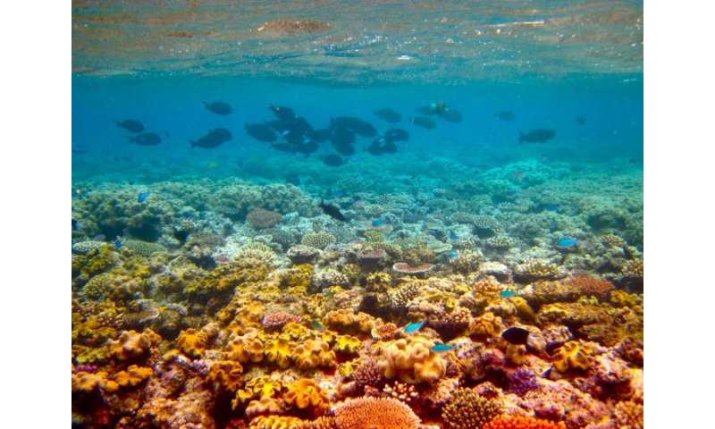 Algae fortifies coral reefs in past and present