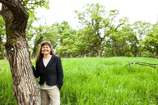 American oaks share a common northern ancestor